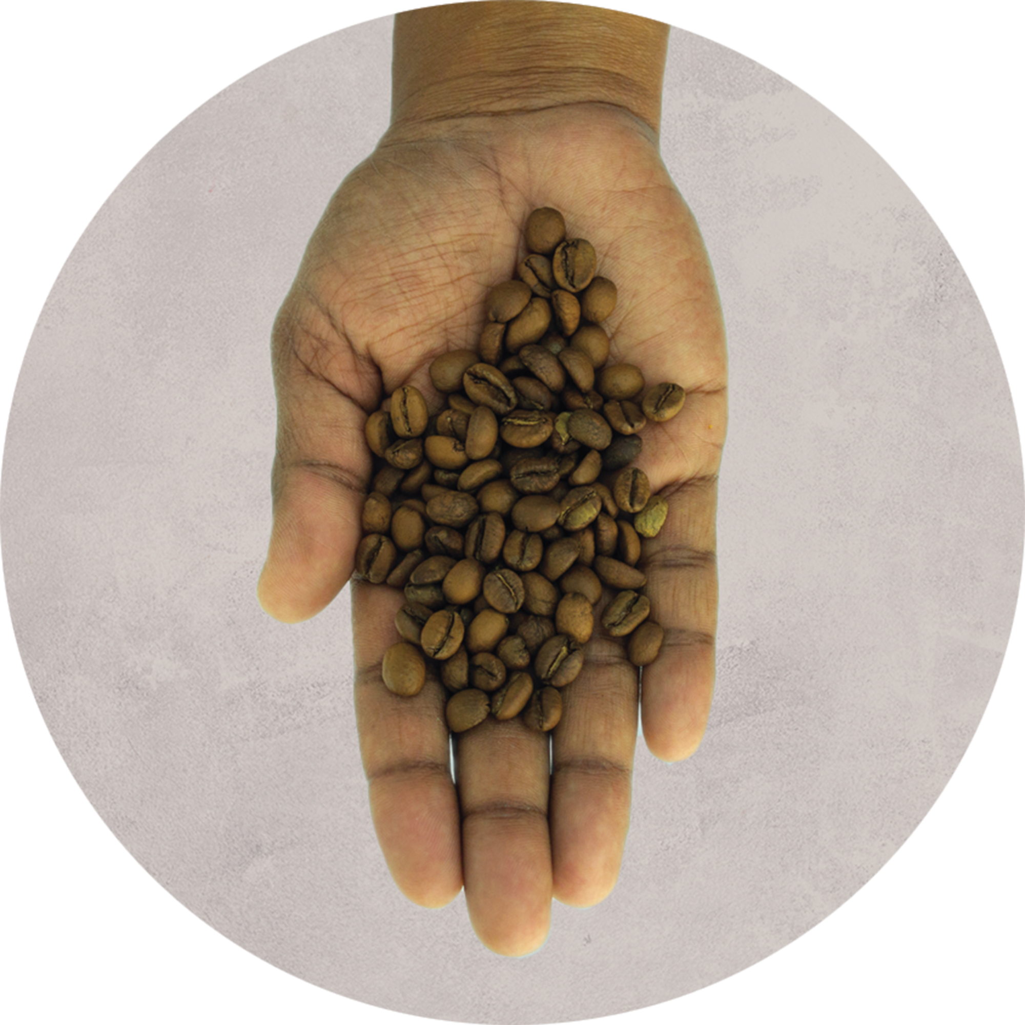 Coffee Beans Seeds Coffee Birmingham